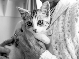 Visuel chaton et personne âgée