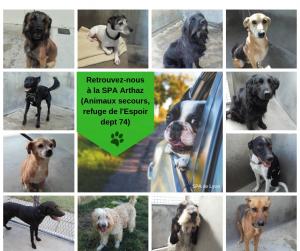 Photos des 13 chiens adoptés