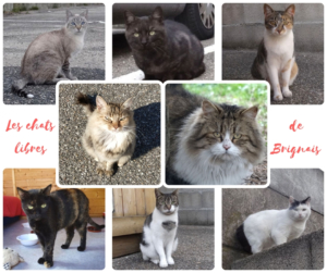 Les chats libres du refuge de Brignais