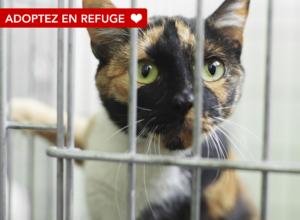 Adoptez en refuge