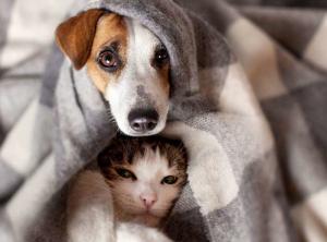 Nos animaux ont besoin de votre soutien