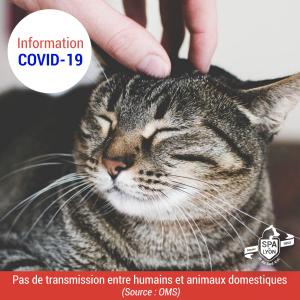 Pas de transmission du COVID-19
