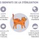 Bienfaits-Stérilisation