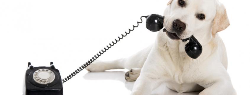 Chien-Téléphone