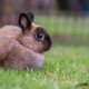 Lapin-Shutterstock