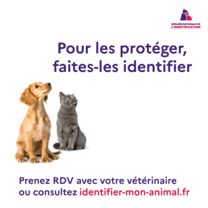 Visuel-Identification