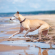 ChienPlage-Dreamstime