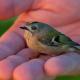 Oiseau-Pixabay