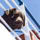 ChienMer-Dreamstime