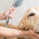 toiletage-chien