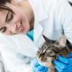 Vétérinaire-Dreamstime
