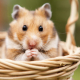 Hamster-Fotolia