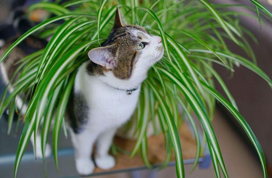 Plante-Istock