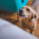 ChienAboie-Dreamstime
